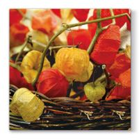 Obrousky PAW L 33X33cm Physalis of Autumn