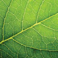 Ubrousky PAW L 33x33cm Leaf Close Up