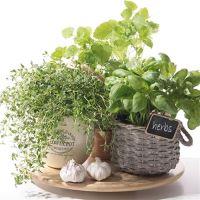 Ubrousky PAW L 33x33cm Flavor of Herbs